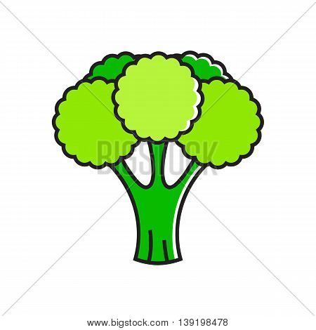 Illustration of green broccoli curds. Healthy food, vegetable, eating. Food concept. Can be used for topics like healthy food, vegetarianism, vegetables