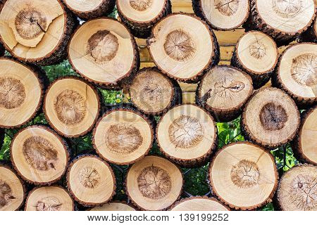 Pile of cut wood stump log texture. Can be used as background