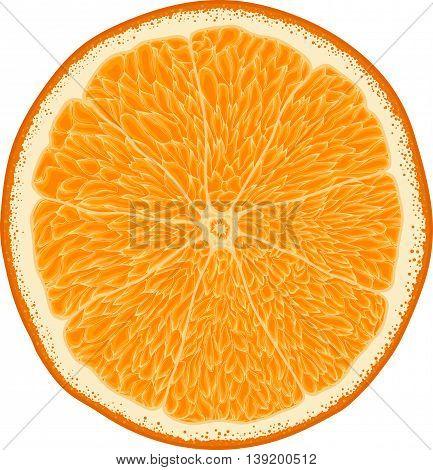 Realistic Vector Orange