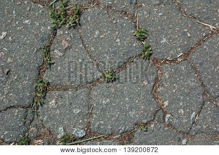 abstract background - gray cracked waterless soil and plants