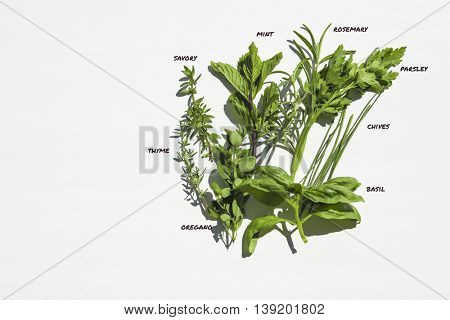 Fresh herbs on white wooden table with names (thyme, savory, basil, oregano, mint, rosemary, chives, parsley). Flat lay food ingredients.