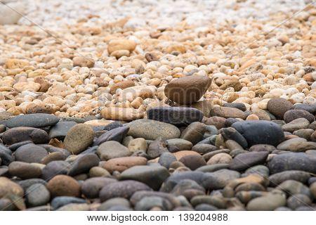 Round Pebble Stones.
