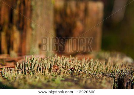 Moss On Stub