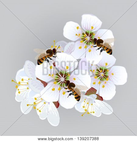 Apricot flowers with bees. Decorative panel with a blossoming branch of an apricot