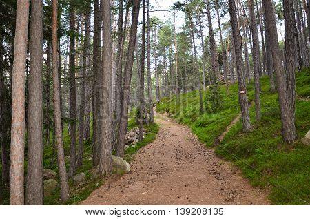 sentiero di montagna tra gli alberi in estate