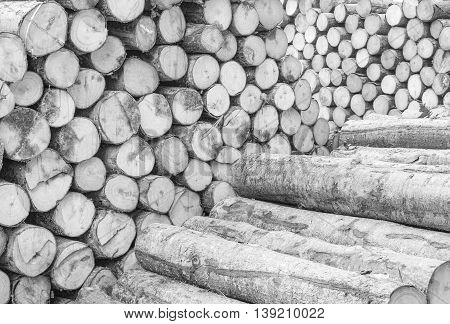 Closeup wood pattern at the pile of old wood timber textured background in black and white tone