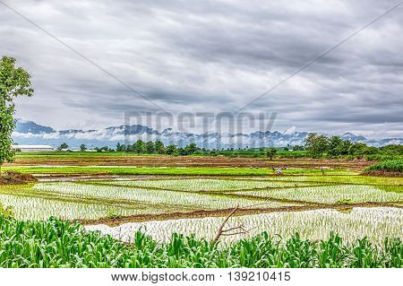 this field is planted with rice which needs to stand in the water in order to grow