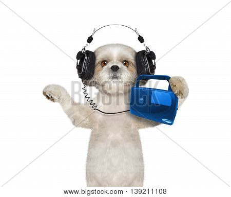 Dog listening to music and dancing -- isolated on white background
