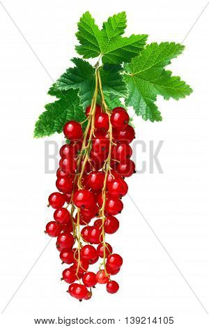Redcurrant Bunch (ribes Rubrum), Paths