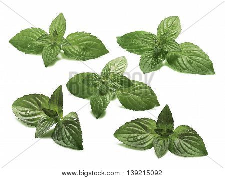 Set Of Sweet Mint  Leaves, Clipping Paths