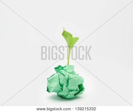 Green sapling in green paper ball shape