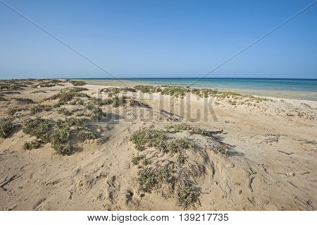 Bushes On Sand Dunes By Tropical Ocean