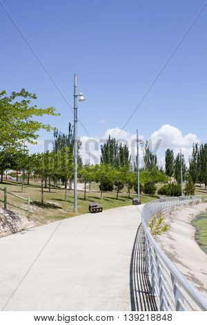 Acacias And Black Poplars In A Park In Summer In Zaragoza, Spain