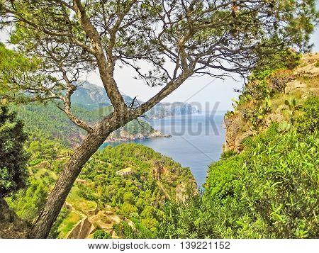 View Through Trees To Ocean, Majorca, Banyalbufar