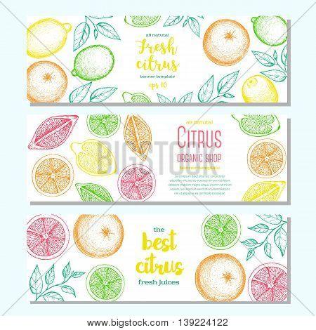 Citrus horizontal banner collection. Lemons and orange hand drawn in ink illustration. Vector vintage fresh illustration. Line art graphic.
