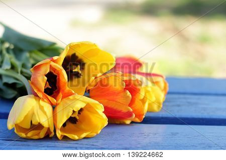 Many tulips flowers on a bench outdoors