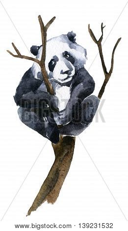Giant panda on the tree watercolor illustration