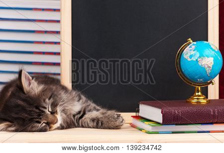 Cute siberian kitten with a blank board for notes over school accessories background