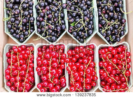 Fruit baskets with red berries and black currants on market