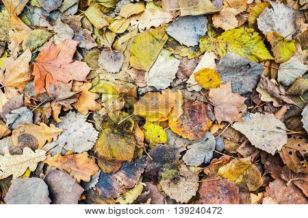 Colorful Autumnal Leaves Lay On Ground