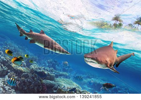 Tropical water with dangerous bull sharks