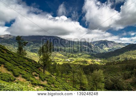 Landscape view of Munnar Valley, Kerala, India