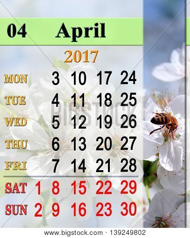 calendar for April 2017 with bee on the cherry tree flower