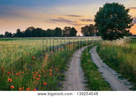 Summer landscape with country road and fields of wheat. Masuria Poland.