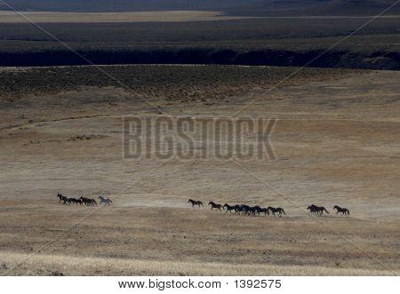 Wild Horse Herd Running Across The Praire