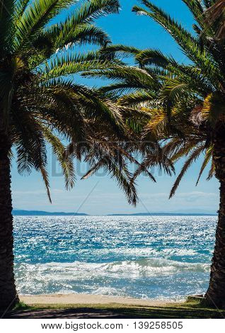 Palm trees on exotic beach, seaside landscape