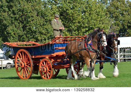 IPSWICH SUFFOLK UK 25 October 2014: East Anglia Equestrian Fair pair of shire horses and cart showing in ring