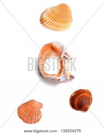 Seashells and broken rapana isolated on white background. View from above.