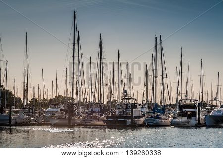 crowded masts in Point Roberts marina at twilight Washington state USA