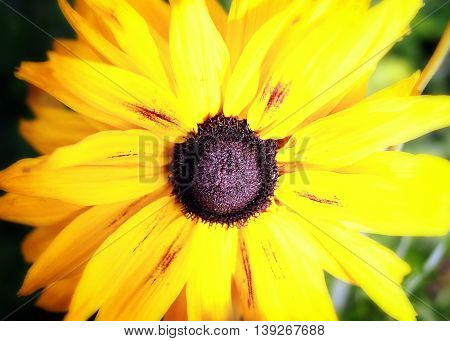Close up of a bright yellow wild flower