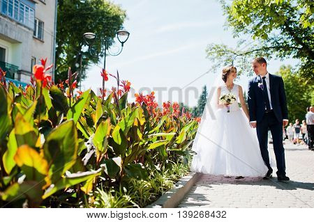 Wedding Couple Walking On Streets Of City With With Lawns Of Red Flowers