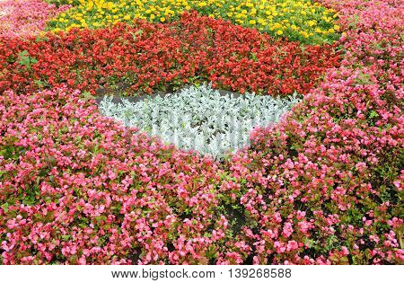 Flowerbed with red flowers it can be used as background.