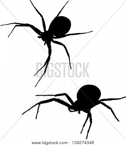 illustration with two spider silhouettes isolated on white background