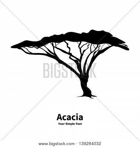 Vector illustration silhouette of an acacia tree. African wood isolated on white background.