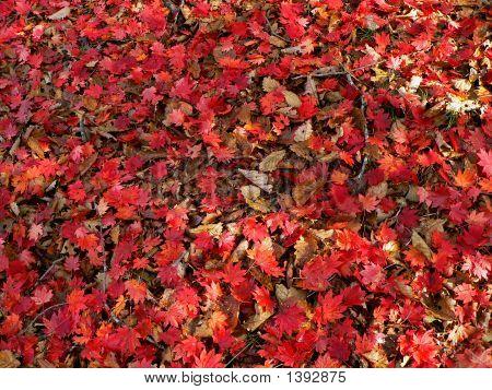 Autumn Carplet Of Leaves