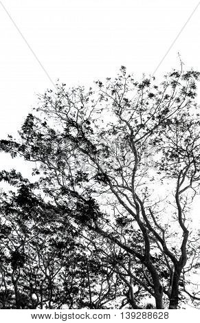 part of tree in black and white isolated on white background