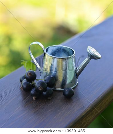 Small watering pot with ripe black currant berries. Summer seasonal background, garden or rural countryside still life, vintage or retro close up
