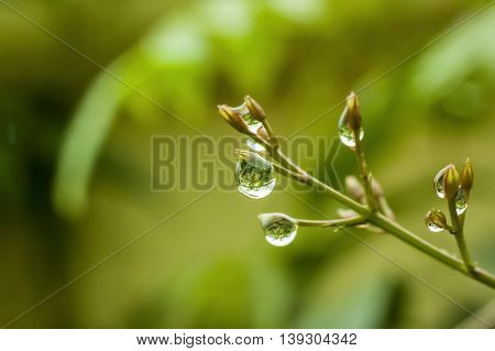 Raindrops with reflection background with shallow dof