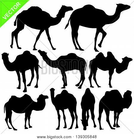 Camels silhouettes vector collections on white color background