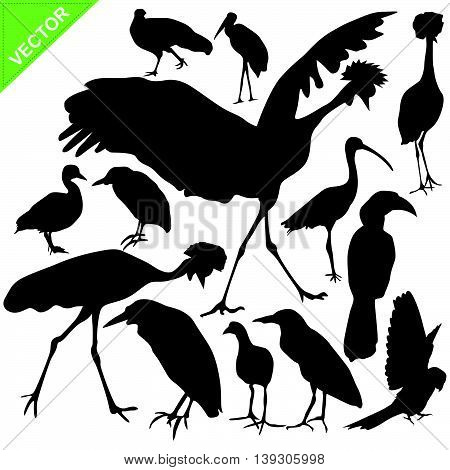 Bird silhouettes vector on white color background