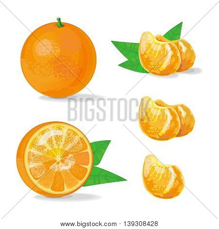 Vector Composition of Orange and Slice with leaves on transparent background. Juicy tropical fruit, slices of mandarin. Vector Illustration