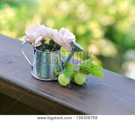Ripe gooseberries and beautiful roses in cute watering can. Summer seasonal background, rural countryside still life, vintage or retro concept
