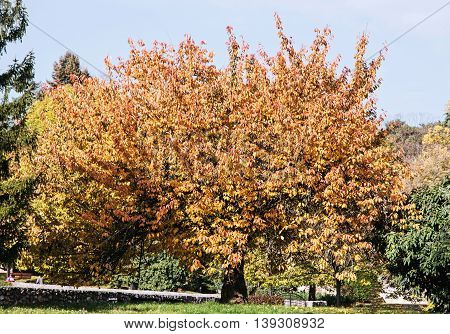 Big orange tree green grass and footpath. Seasonal natural scene. Beauty in nature. Autumn theme.
