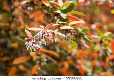 Multicolor plant with seeds in autumn nature. Beautiful seasonal scene. Vibrant colors.