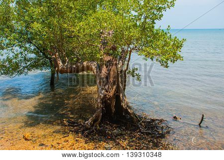 The Roots Of The Trees. Peninsula Of Railay. Krabi, Thailand.
