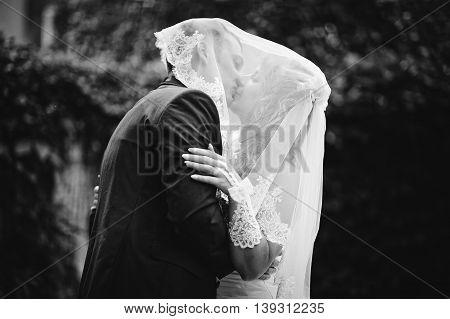 Kissing wedding couple under the veil at wedding